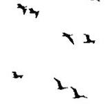 inflammablebirds